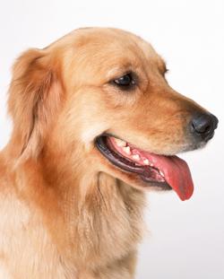 犬のワクチン