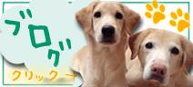 グリーン動物病院ブログ