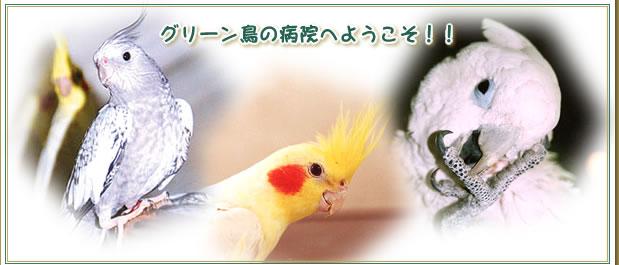 千葉県 動物病院 鳥 グリーン動物病院