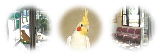 リンク集 千葉県 動物病院 鳥 グリーン動物病院